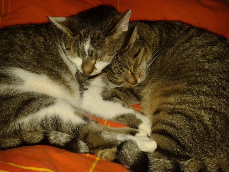 venkovní kočičí galerie zdarma mobilní lesbické por